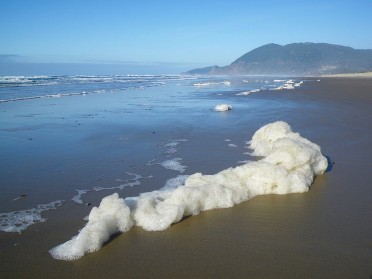 A snakelike line of sea foam at the top of the swash zone
