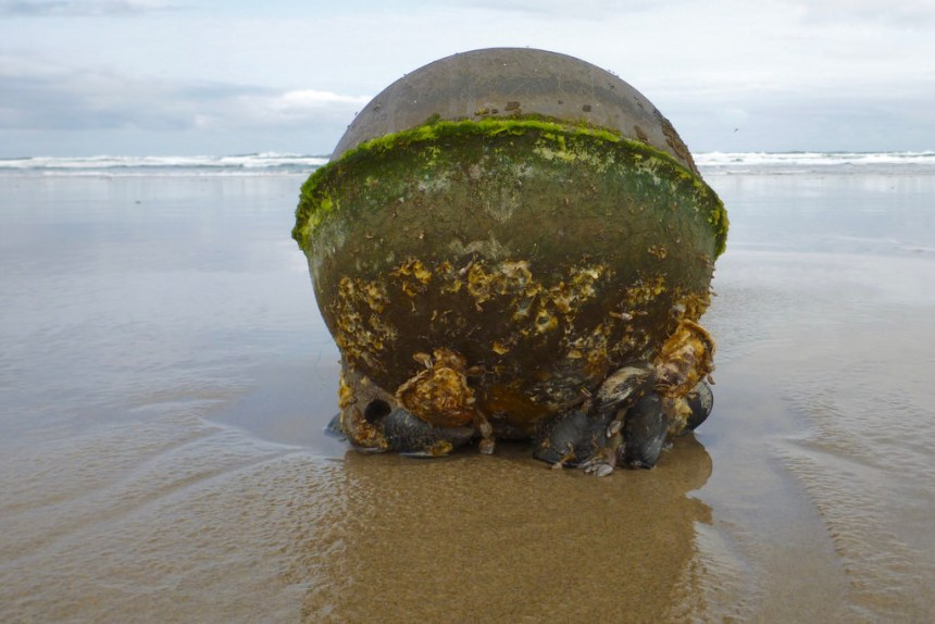 Large drifted float on sand, still with a live community