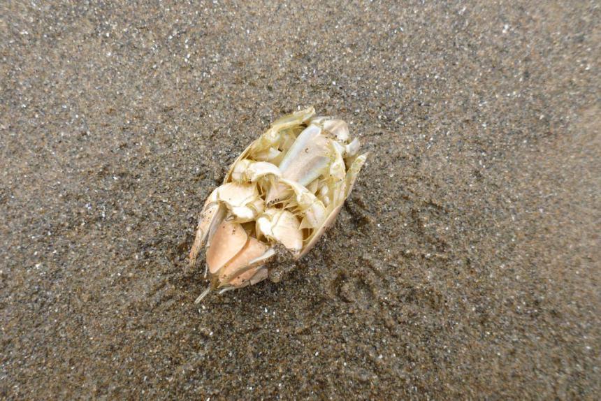 on wet sand