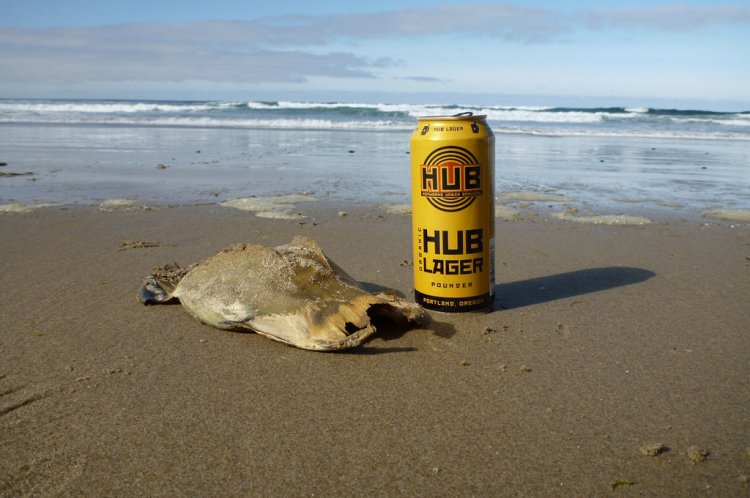 on sand, 16 oz beer can for scale- on sand, looking out to the surf