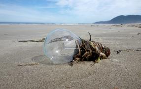 Beach bulb