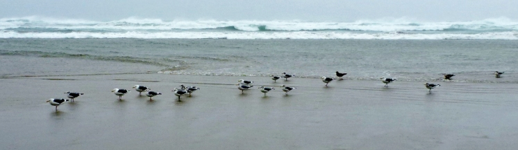 Gulls waiting out a stiff wind