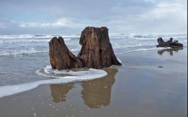 I love this old stump