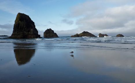 Gull, sea stack