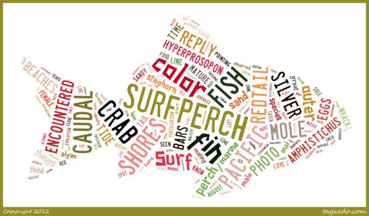Word cloud of the text from the first 20 theoutershores posts