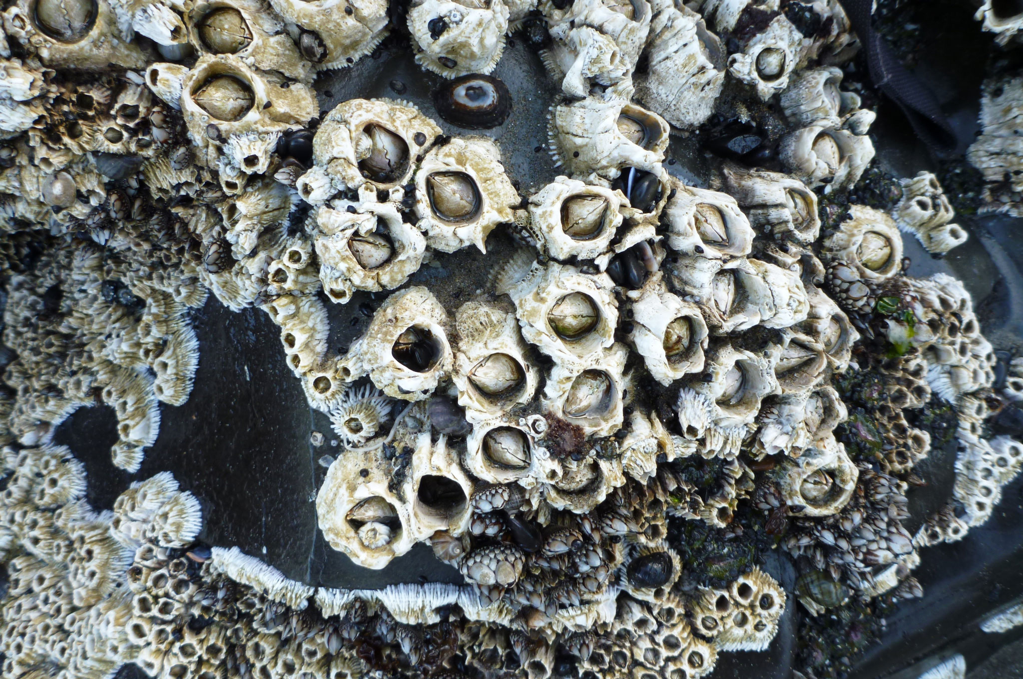 Barnacles On Top of Barnacles – theoutershores