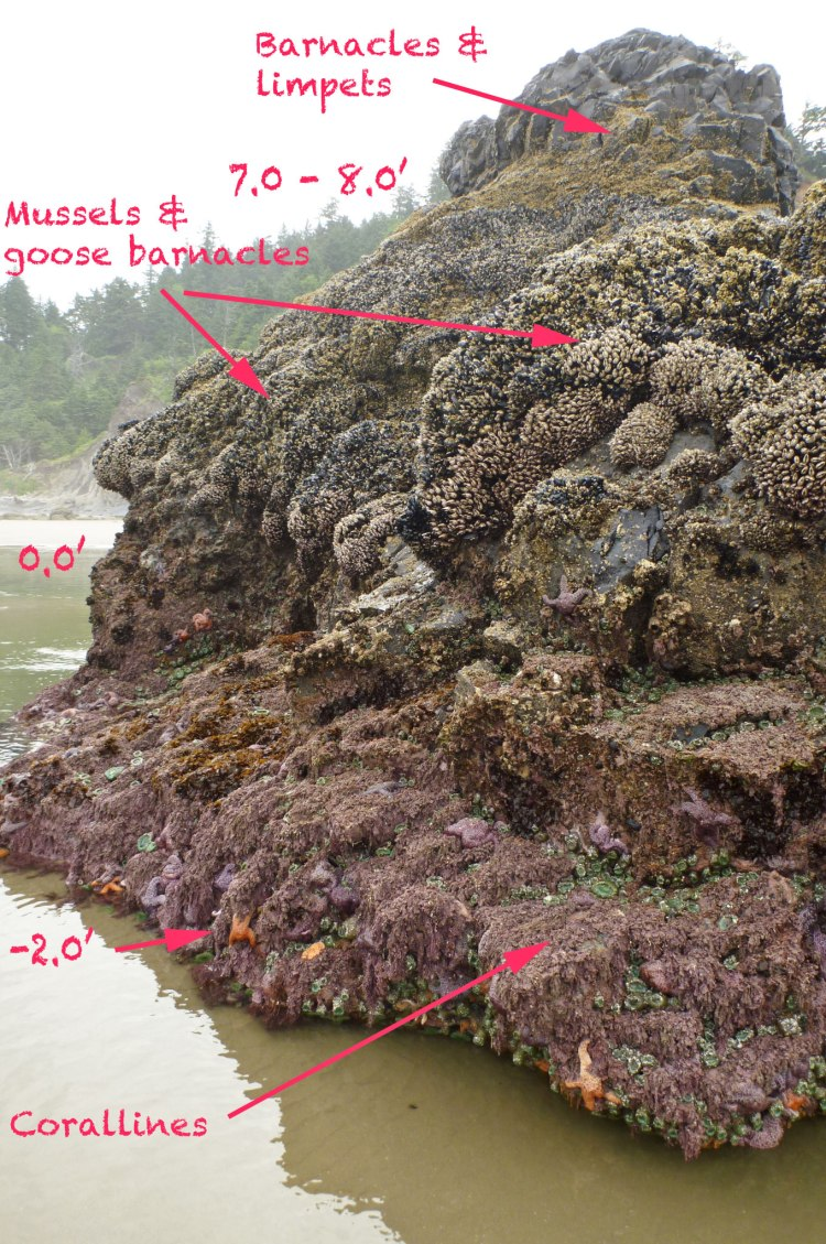 Low tide in the exposed rocky intertidal