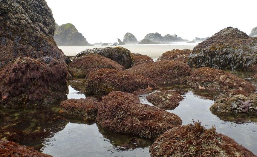 Low tide pool