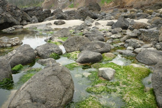 High tide pools with rocks and sand, some green algae showing