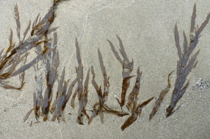 Several strands, partially buried in beach sand