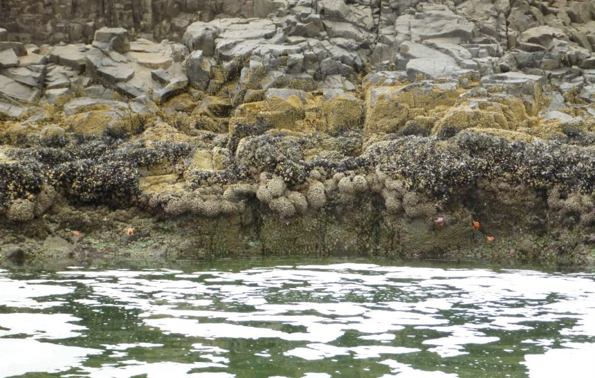 Patches of sea foam on the surface of a low tidepool