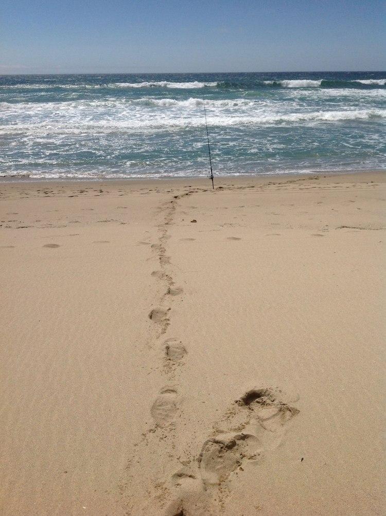 N Pescadero rod
