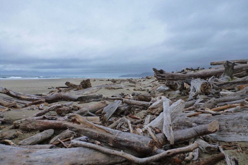 Big waves and high tides push the big wood up into the wrack line