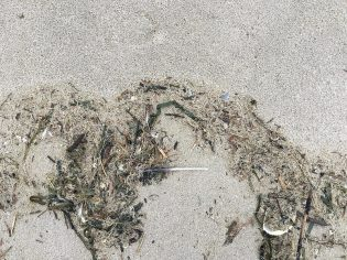 lot of stuff in the drift line, eelgrass, Dungeness crab carapace, mole crab exoskeletons, cellophane tube worm parts