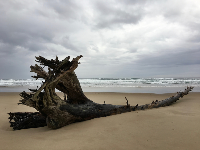 Solitary drift log on the beach; surf and loads in the background