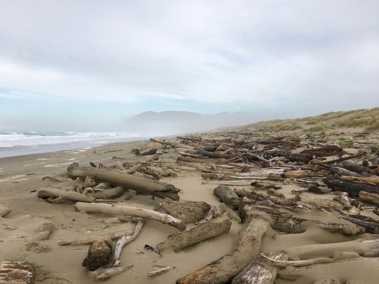 Big wood littering the backshore   November
