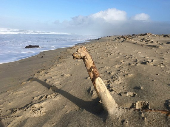 driftwood emerging from the sand looks like a curious creature
