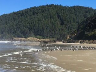 Gulls loafing at the creek mouth