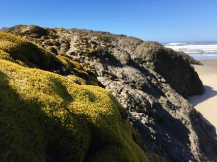 Moss carpet on the supralittoral fringe