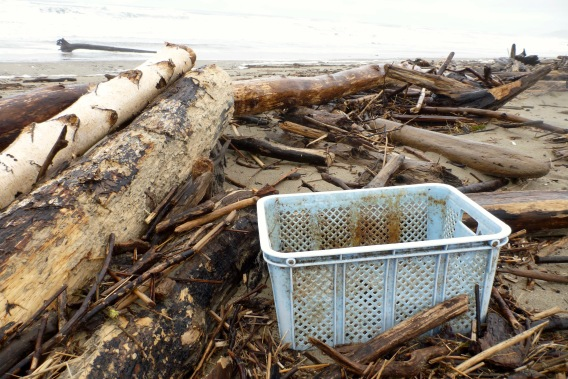A crate for your wrack line treasures | January