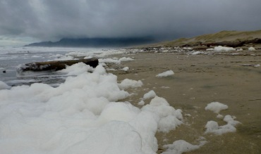 Sea foam - a product of phytoplankton breakdown | January