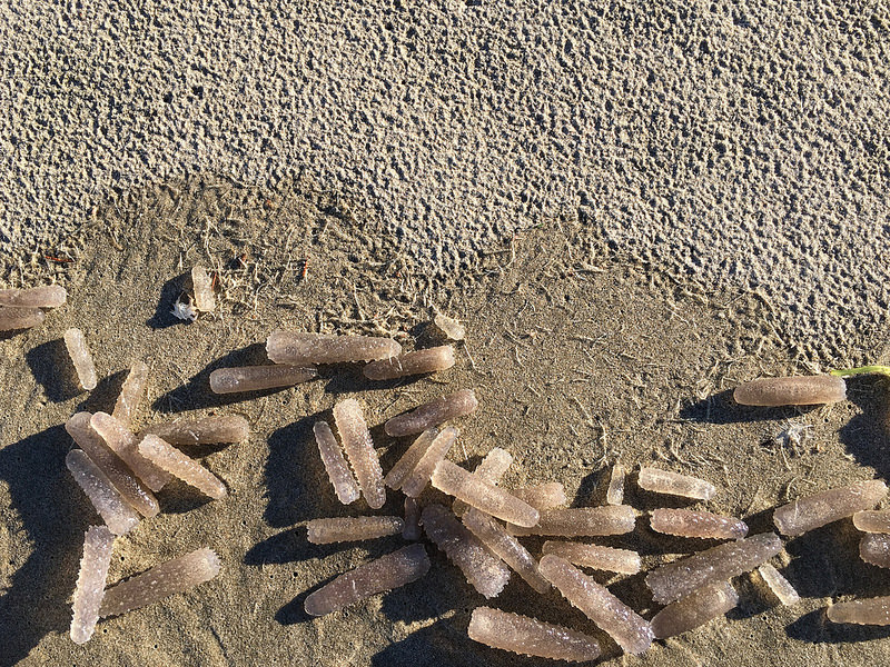 A drift line littered with pyrosomes   December