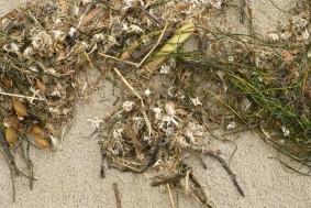 Bunch of drift line material on beach sand