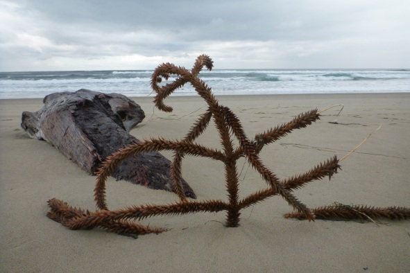 A drifted branch in the sand, surf in the background