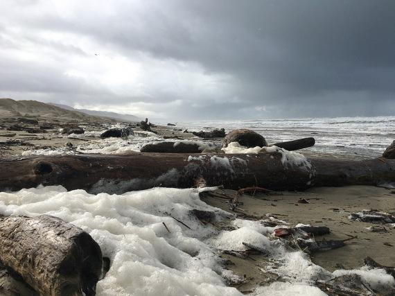 Sea foam, a product of phytoplankton breakdown