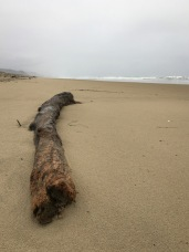 Big lone drift log on a deserted beach, fog in the distance