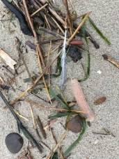 intimate view of feather, pyrosome, eel grass, dead terrestrial plant material