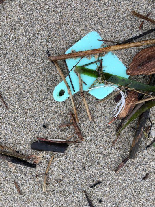 Blue tag on drift line sand