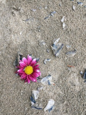 Lost flower in the drift line