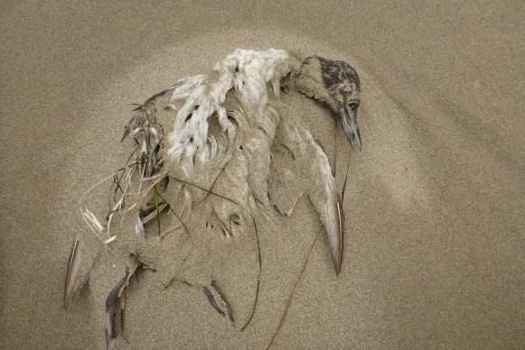 Old carcass, partially covered in sand