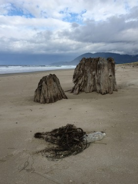 Old growth stump projecting from the sand