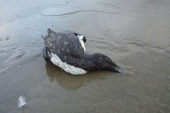 dead on wet sand