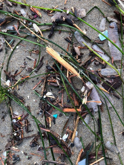 material from pelagic, rocky intertidal, subtidal, and terrestrial ecosystems, and plastic too