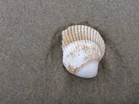 One valve on sand