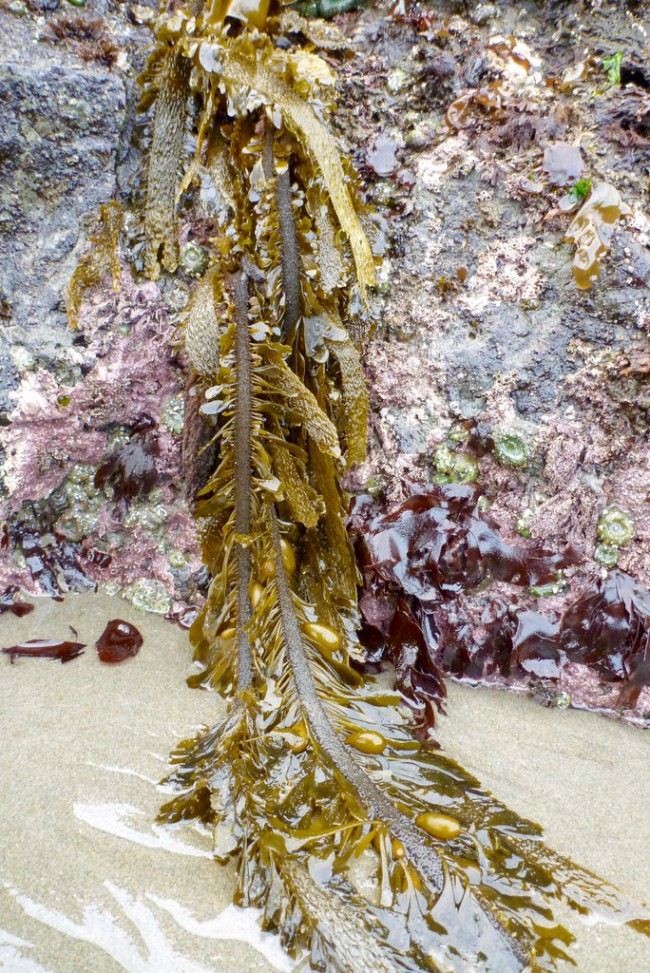 Long strands of feather boa drape down over a rock onto the sand at low tide