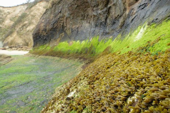 A zonation shot showing bands of algae