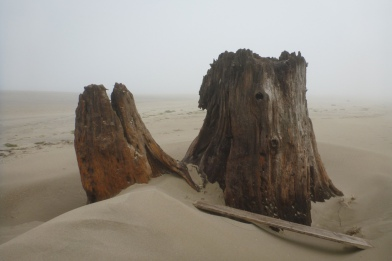 Stump on dry sand, fog