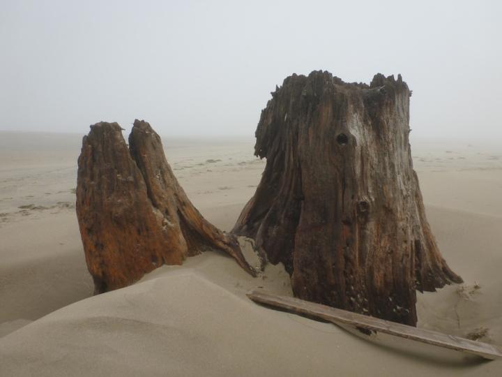 Stump on dry sand, fog