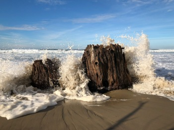 Surf kissing the stump on a sunny day