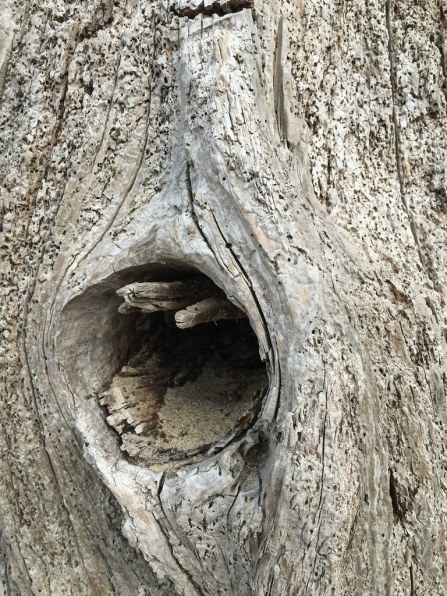 Intimate view of a knot hole on the stump