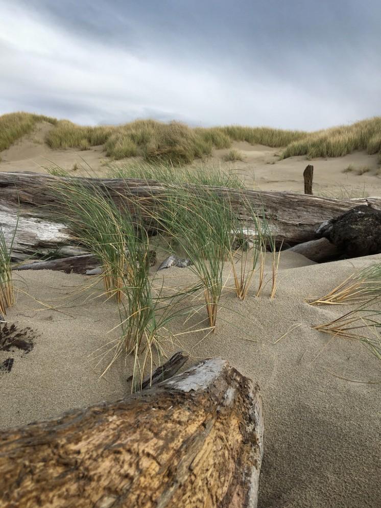 Big wood on the backshore; foredune in the background