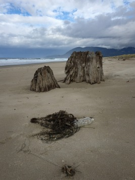 Old stump | his tide came and went without wetting it