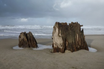 Stump on wet sand, surf in the background, cloudy day