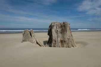 Blue sky summer day, stump on dry sand