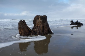 Stump, kissed by the swash, reflection in the mirror