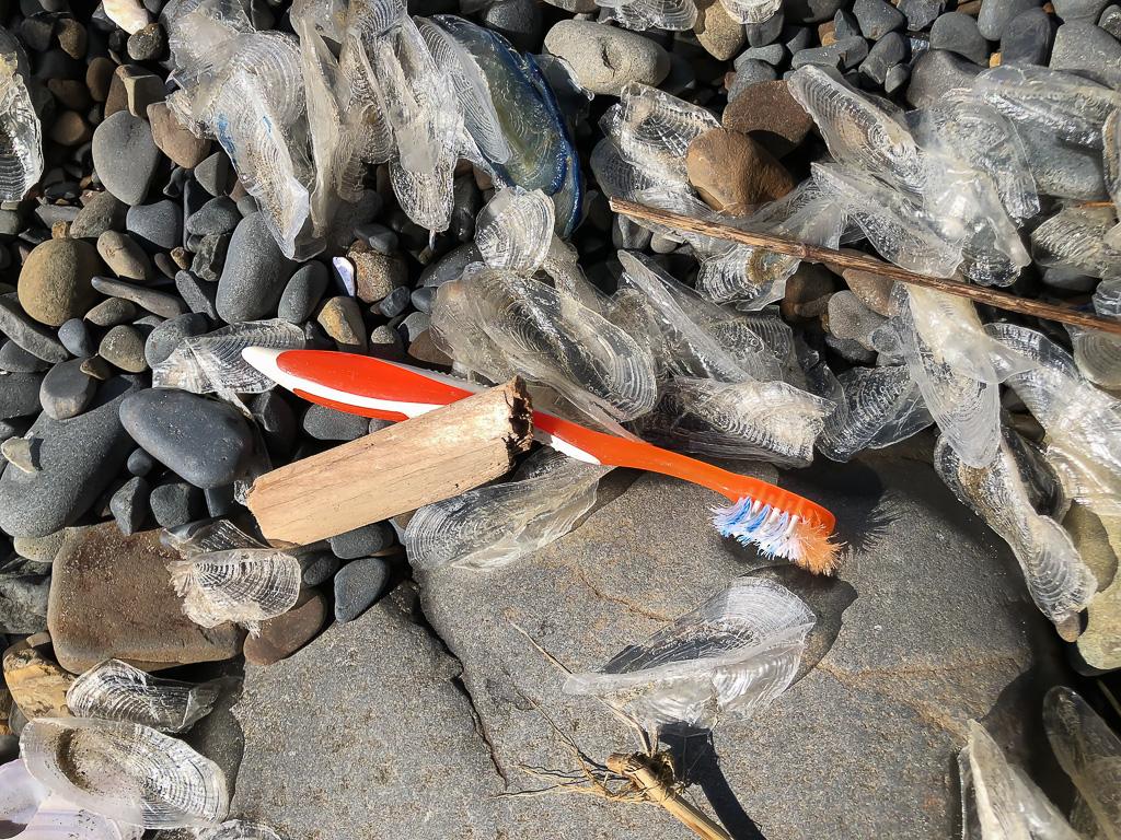 Orange toothbrush